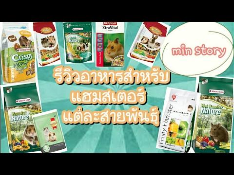 การเลี้ยงแฮมสเตอร์: อาหารที่เหมาะกับแฮมสเตอร์แต่ละสายพันธุ์ Hamster / min story