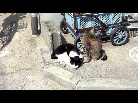 Thumbnail for Cat Video Cats on Manabe Island in Japan