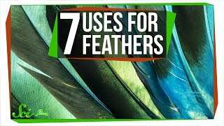 7 Wacky Ways Birds Use Feathers