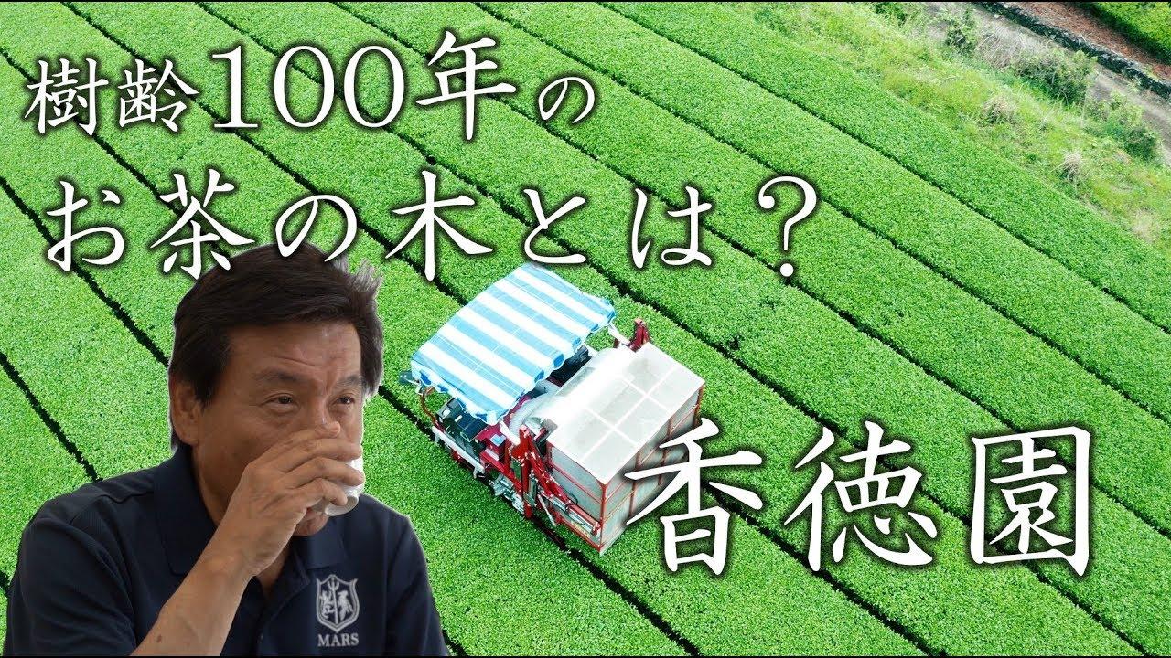100年生きるお茶の木|熊本|水俣|香徳園