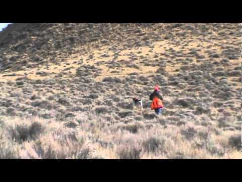 Wild hungarian partridge hunting wyoming youtube for Wyoming out of state fishing license