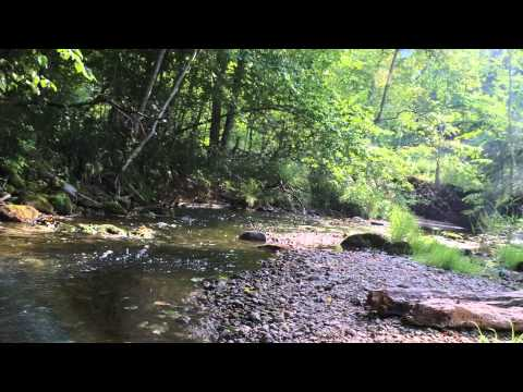 Europe, Latvia, Gauja National park, river flow videoscape, 25th of August 2015