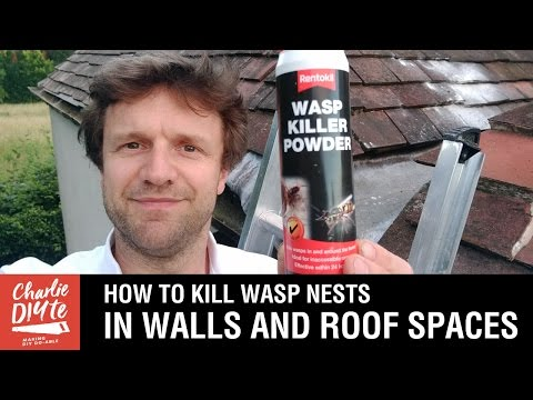 How To Kill Wasps Nests In Walls And Roof Es