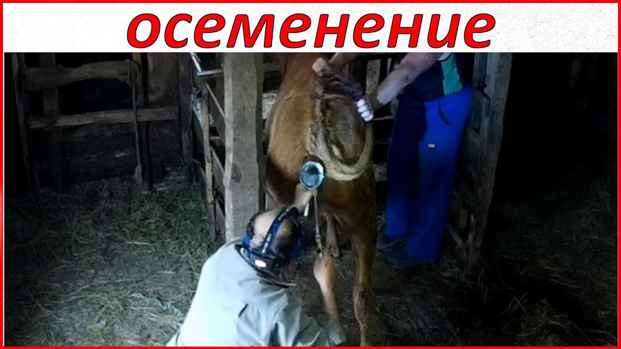 Семья, дом которой граница «перерезала» наискосок (кухня с туалетом поначалу отошла к россии, а остальное — к украине) со временем сумела.
