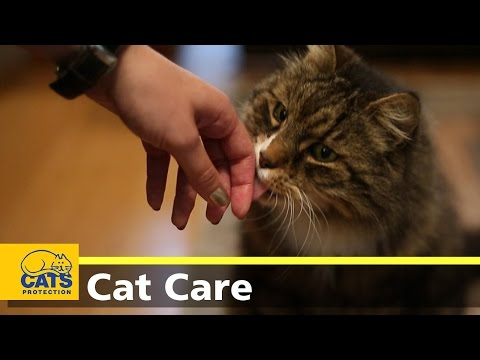 How to alleviate cat allergy symptoms