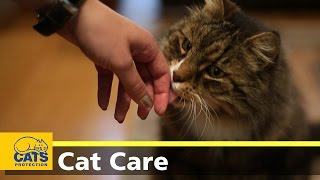 You may not be able to cure a pet allergy, but there are things you...