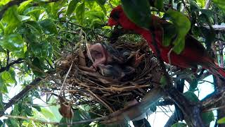 Birds 7 29 18