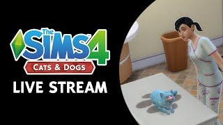 The Sims 4 Cats & Dogs: Vet Clinic Live Stream (October 26th, 2017)