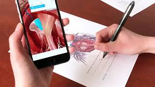 3 Ways to Use Augmented Reality in Anatomy Courses | Human Anatomy Atlas 2018