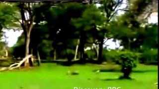 Discovery BBC Documentary Animals 2015 Wildlife Specials