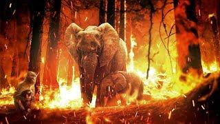 आखिर और कितनी सच्चाई छुपाएगी ये Media Amazon जंगल के बारे में | Worlds Biggest Threat To The Mankind