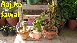 Aaj Ka Sawal | Kya Cactus Indoor Reh Skta Hai ?