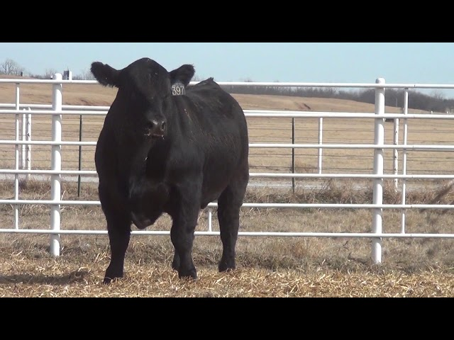 Express Ranches Lot 397