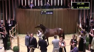 ARQANA - Vente d'Août 2015 - 2de TOP PRICE Day 2 - Lot 185