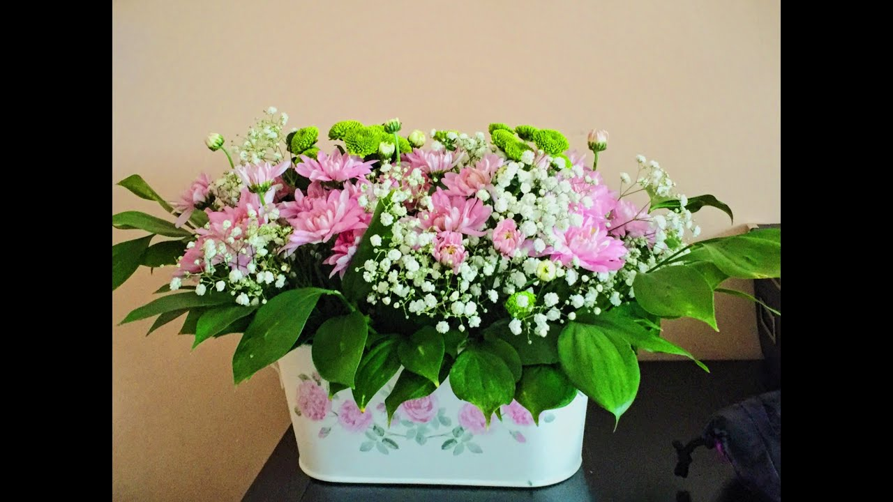 Фото цветов бобы