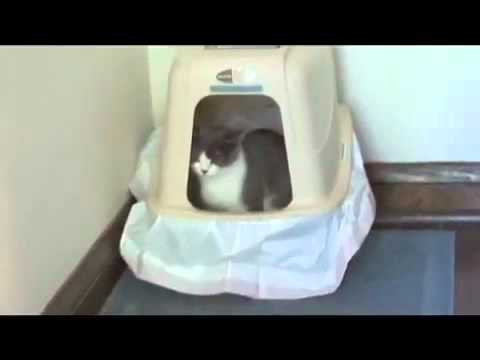 Som blbá mačka! – I'm a stupid cat – SK titulky