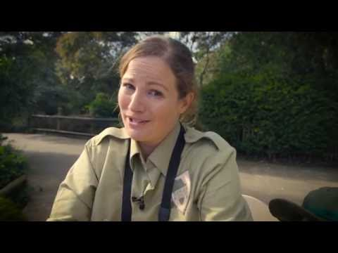 Ranger Academy - July school holidays at Auckland Zoo