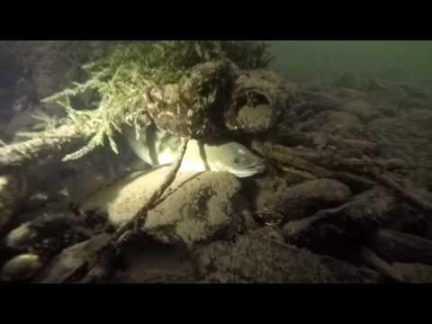 Unterwasserwelt Ruhr