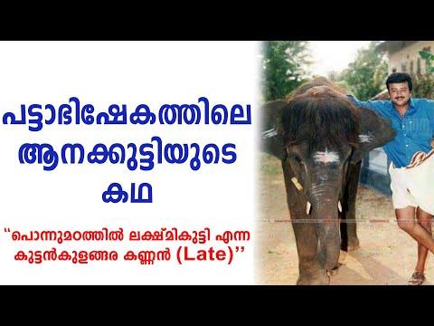 പട്ടാഭിഷേകത്തിലെ ആനക്കുട്ടിയുടെ കഥ   Pattabhishekam Movie Elephant Story   Nettipattam