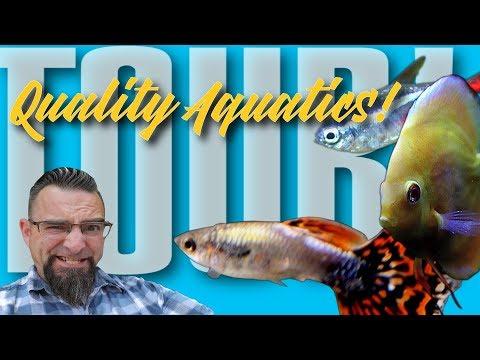 Quality Aquatics Store Tour!