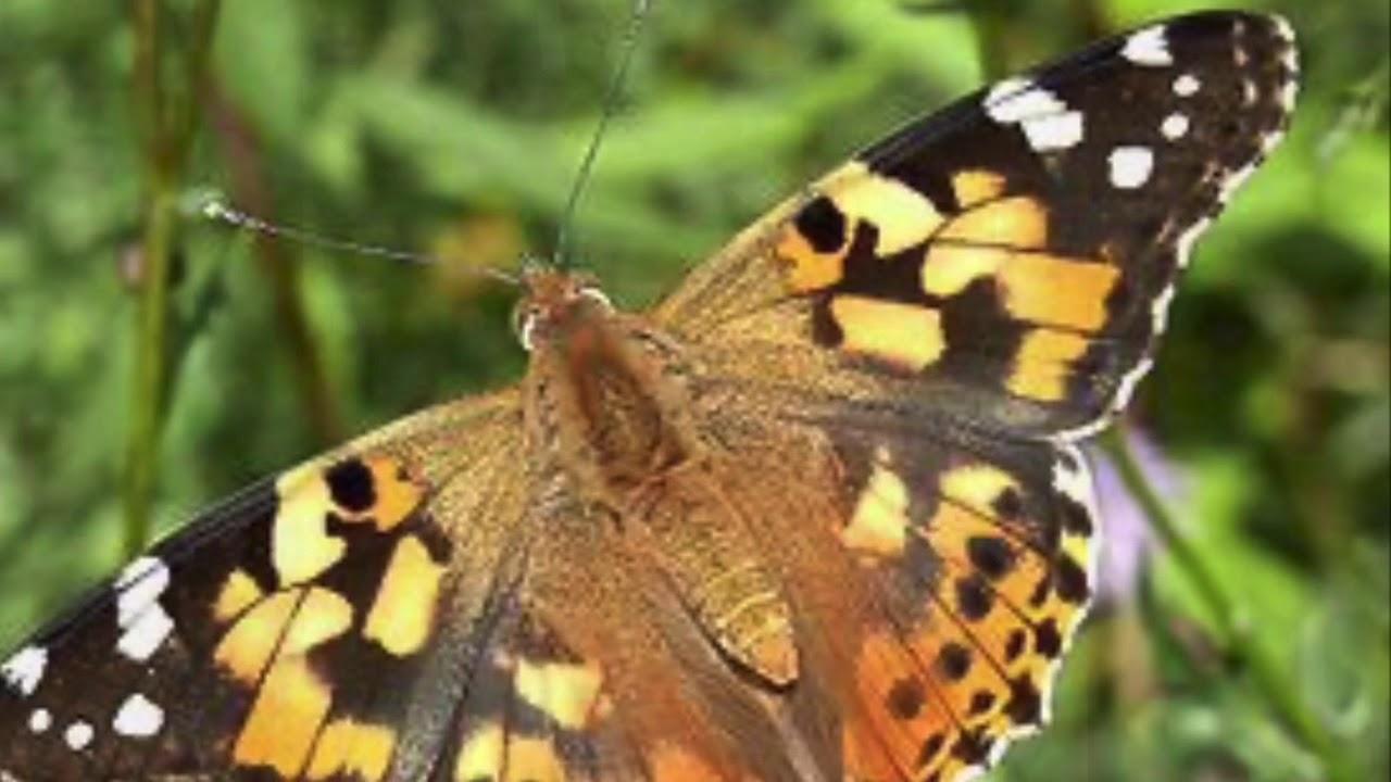 Von der Raupe zum Schmetterling Teil 7 ( Tag 8) - YouTube