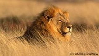 Ethiopia: Lion Protection Program | Global 3000
