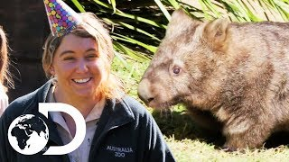 Celebrating Minibus The Wombat