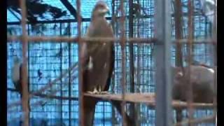 Birds of Parassinikadavu snake park, Kannur