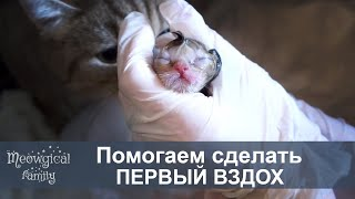 Как помочь при родах: котята