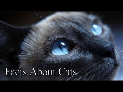 facts about cats - top cat documentary \ 1# planet (new cat documentary)