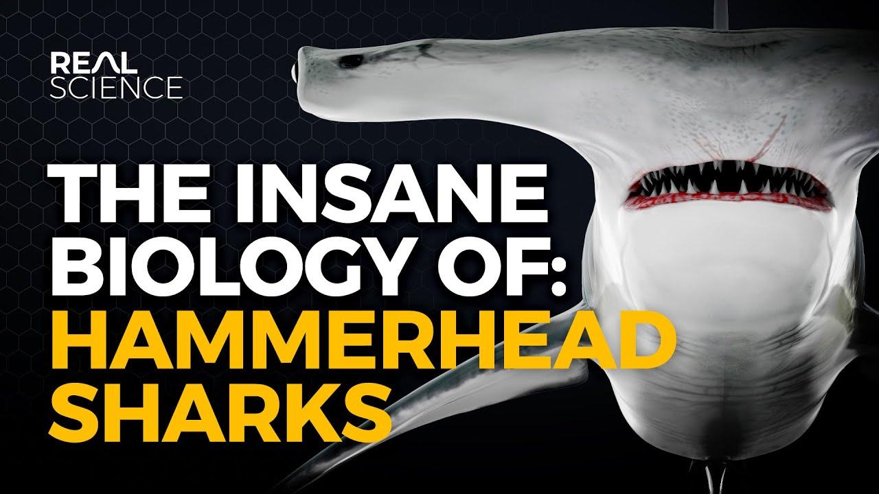 The Insane Biology of: Hammerhead Sharks