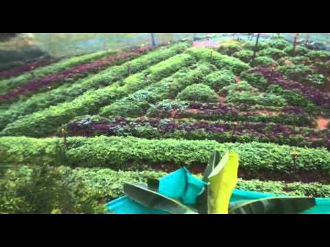 Organic farm by Aaranya