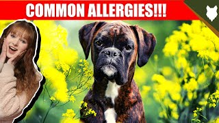COMMON ALLERGIES FOR BOXER