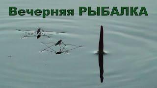 На вечёрку с поплавком. Рыбалка. Ловил окуня на червя. Поплавочная удочка. Fishing. Поплавок