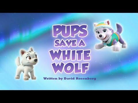 Видео: Щенки спасают волка Pups Save a White Wolf