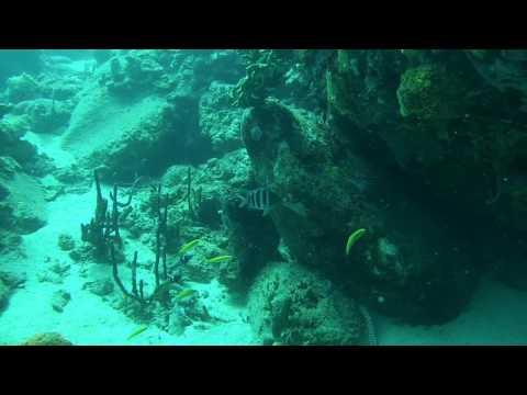 Anguille à St Lucia