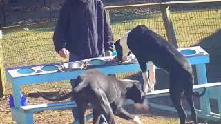 PM Feeding Ringo Musician Danica Athlete tr Steve 492018