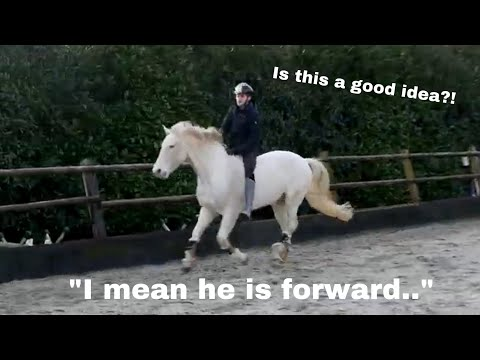 RIDING MY GOLDEN HORSE WITHOUT ANY TACK
