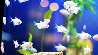 Дачный пруд для разведения рыб(Пруд для разведения рыбы. Вы хотите создать на приусадебном участке пруд с растениями, в котором наряду..., 2014-08-09T14:40:46.000Z)