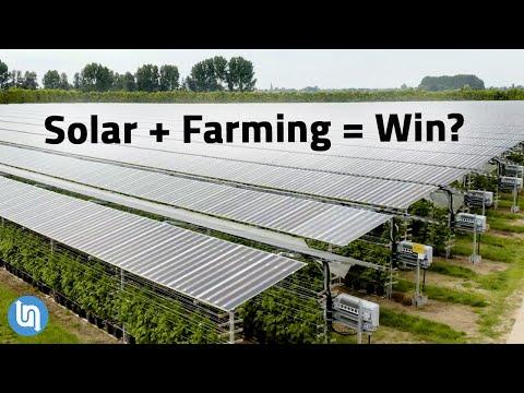 Solar Panels Plus Farming? Agrivoltaics Explained