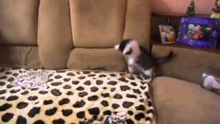 Котенок и соска