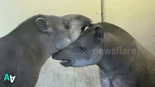 Zoo Animals Feel the Love on Valentine's Day