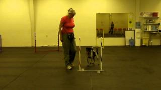 Foundation Skills - 2x2 Weave Pole Training  (part 2/3)