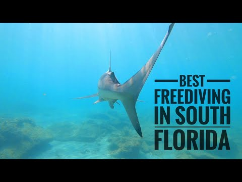 THE MOST BEAUTIFUL FREEDIVING! JUPITER FLORIDA