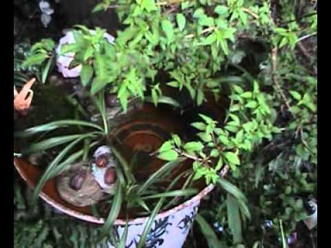 Fuente de agua para un buen feng shui youtube - Fuente de agua feng shui ...