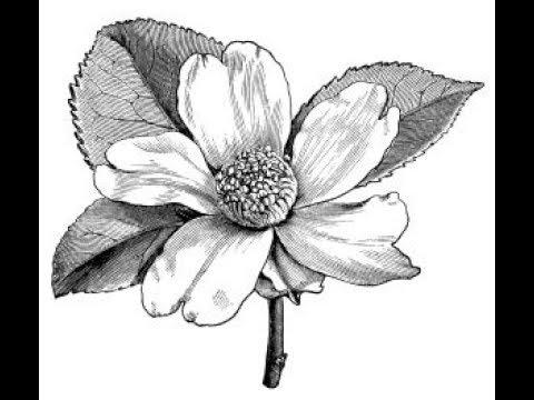 Dibujos De Flores Ideas Para Tu Tatuaje Youtube