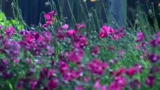 Gypsy Serenade - Armando Sciascia Orchestra
