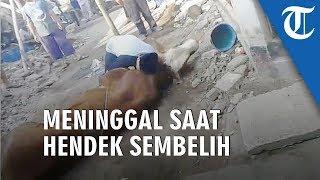 Viral Video Seorang yang Diduga Jagal Meninggal saat Hendak Menyembelih Hewan Kurban  from