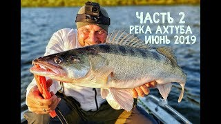 Судак в ПОЛВОДЫ - мифы или реальность, ИЮНЬ рыбалка 2019 на Ахтубе - СУПЕР РЫБАЛКА