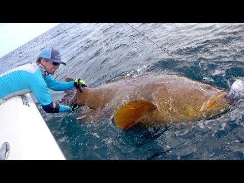 Giant Grouper Handline Fishing Challenge - 4K